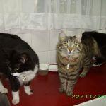Tier, Kadoesie en Kabouter